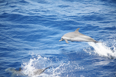 CARIBBEAN SEA - Ten days of sailing from Nassau, Bahamas to Panama City, Panama through the Panama Canal. Over 1700 miles covered, seas were fair, sunny most of the way. Crew: Shawn Griffith (Captain), Amy Griffith Redfern, Sasha Gates, Cameron Martindell