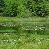 June 7, 2014. Parsnips Lakes, Cascade-Siskiyou NM, Oregon