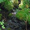 June 7, 2014. Spring at Parsnips Lakes, Cascade-Siskiyou NM, Oregon