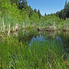 June 7, 2014. Parsnips Lakes, Cascade-Siskiyou NM, Oregon