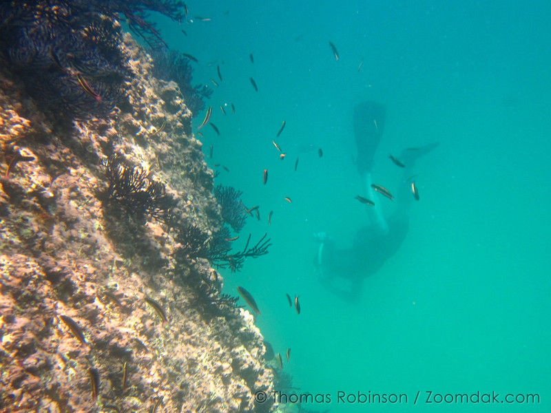 Jonathan Robinson dives in the Sea of Cortez to look at the fish deeper underwater.