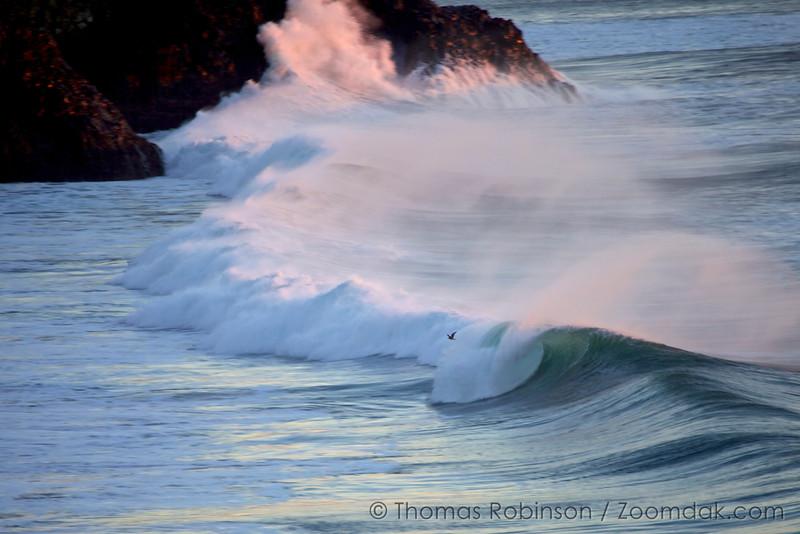 Seagull Wave Flight