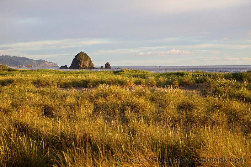 Dune Grass and Haystack Rock