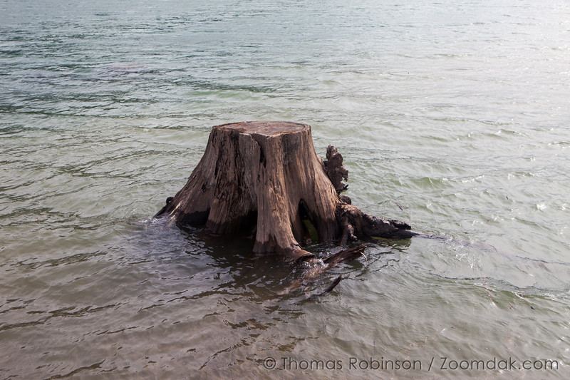 Detroit Lake Stump