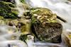 Leaves perch on a rock that looks like an altar in a waterfall along the Little Spokane River.
