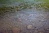 Rain Ripples on Hoh Lake