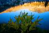 Corn Lily, Lower Ottoway Lake, Yosemite NP
