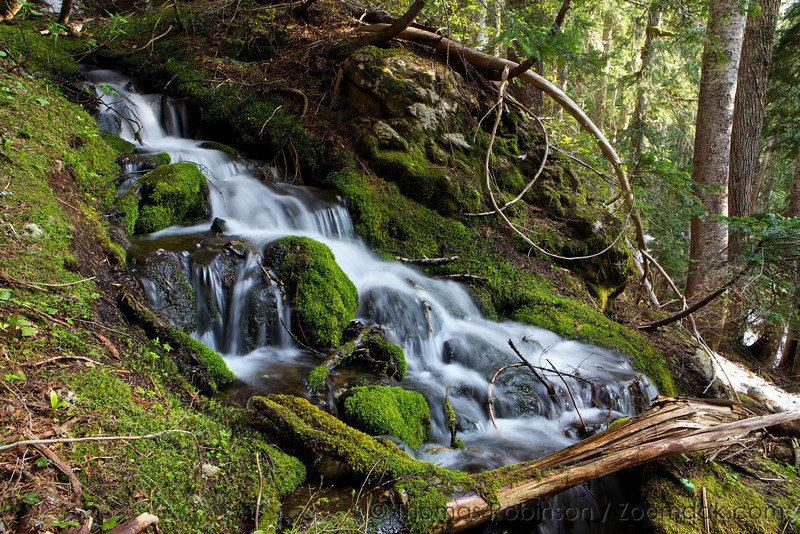 Forest Waterfall in the Olympics