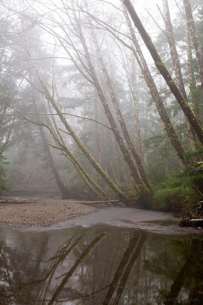 Ecola Creek in the Fog