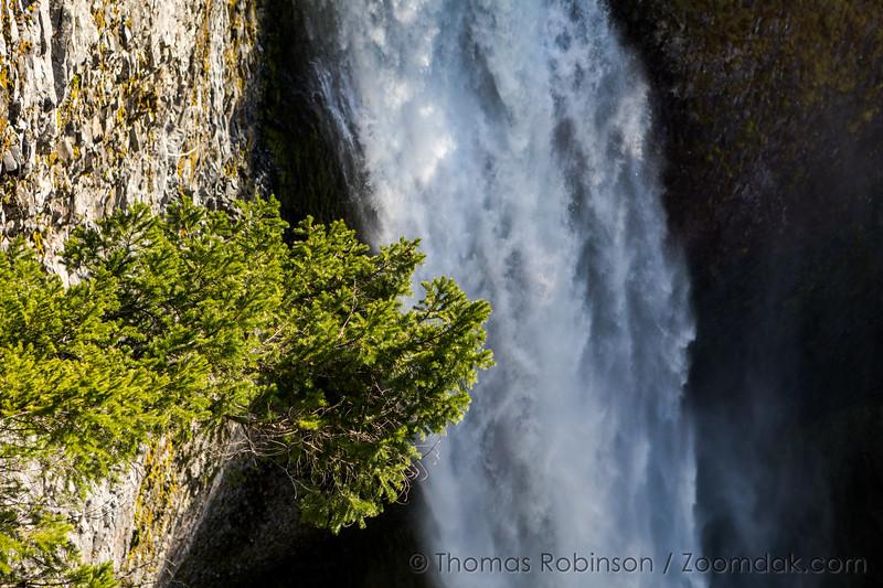Salt Creek Falls Detail