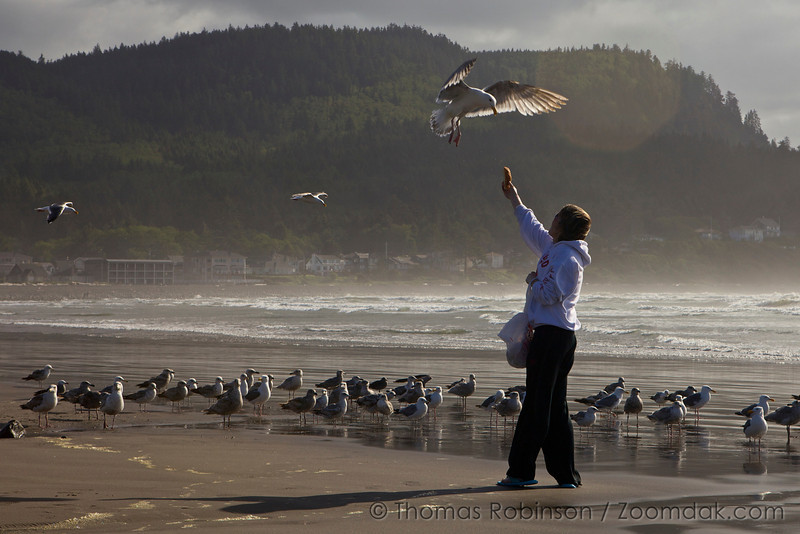 A woman feeds a flying seagull (Larus pacificus) near the cove in Seaside, Oregon.