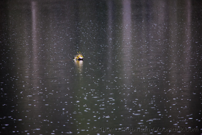 Lost Lake Rain