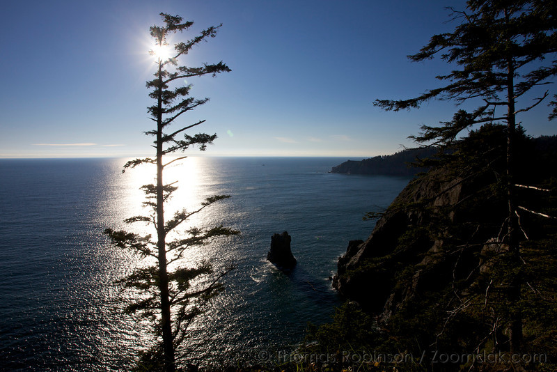 The sun shines through a pine tree that hangs to the cliffside of Devil's Cauldron.