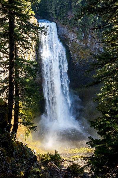 Salt Creek Falls Thru the Trees