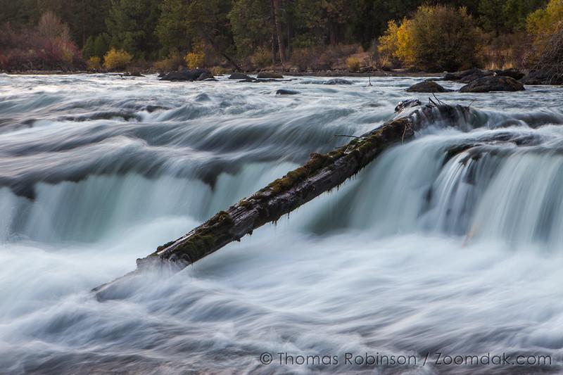 Fallen Log at Dillion Falls