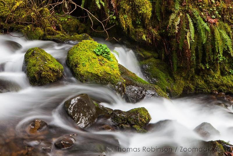 Intimate Creekscape