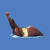 Giant Seal Slide #9116