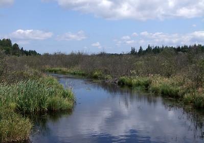 FreshwaterStreamManitoulinIsl