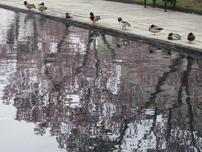 Indirect ducks