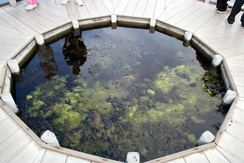 Observation port in vernal pool boardwalk, Santa Rosa Plateau Ecological Reserve, 16 Mar 2008