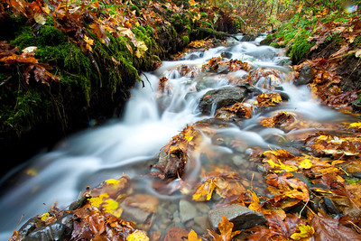 Unnamed Creek; November 12, 2012; Columbia River Gorge National Scenic Area, Multnomah County, Oregon