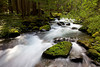 Royal Creek flows past moss covered rocks near the junction of Royal Creek and Dungeness River in the Olympic National Park, Washington.