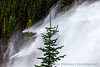 Pine Tree and Waterfall, Horizontal