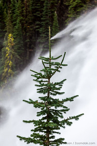 Pine Tree and Waterfall, Vertical