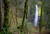 Latourell creek plunges 224 feet over Latourell Falls which mirrors the shape of the tree trunks along the hike to Triple Falls in the Columbia River Gorge.
