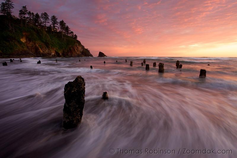 Ghost Forest - Neskowin, Oregon