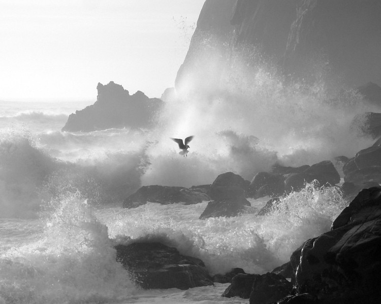 I was down below the Nehalem cliffs photographing these big waves rolling in. I saw this seagull (larus argentatus) circle in and land down among the rocks. I was incredulous that this seagull landed down in these rocks! I had my camera ready and as it took off when the big waves came in, I captured this.