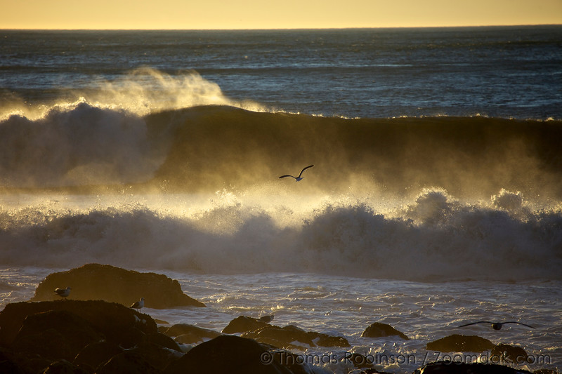 Golden Wave with Seagull