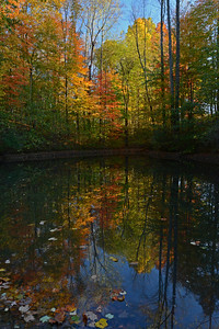 October Pond Reflections