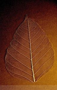 Golden Bodhi Life Lines