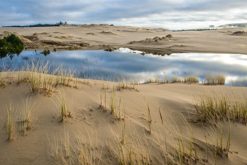 Oregon Dunes Morning