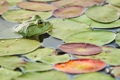 The Keeper of the Pond