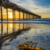 Scripps Pier and Kelp