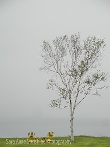 By the Sea and Fog in Nova Scotia 0610