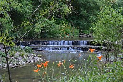 Creekside Lilies