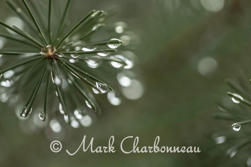 Raindrops on the Needles