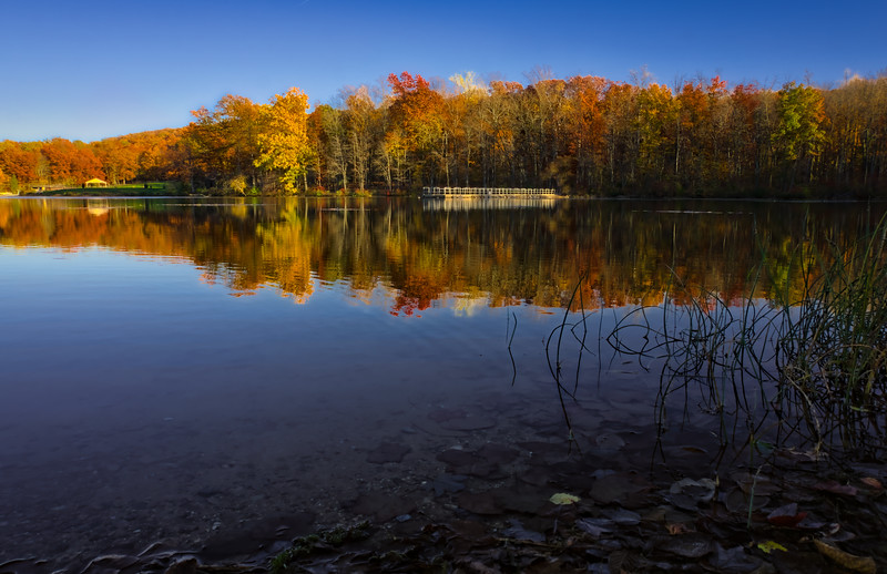 1093 - Autumn 2016 - Shore to Shore French Creek (p)