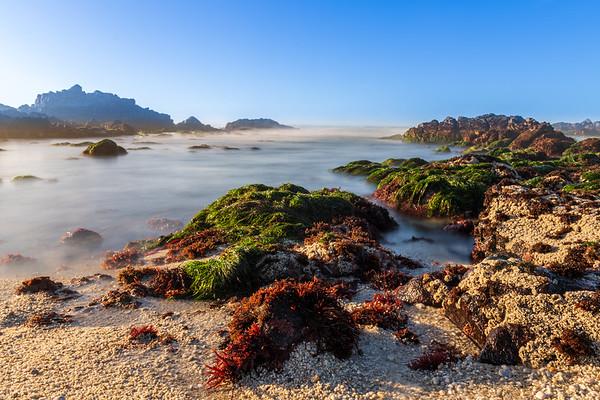 Tidal Pool and Seaweed at Pacific Grove