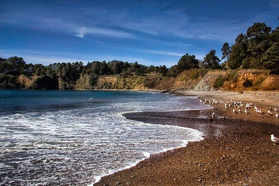 Pacific Coast Beaches and Scenic Views