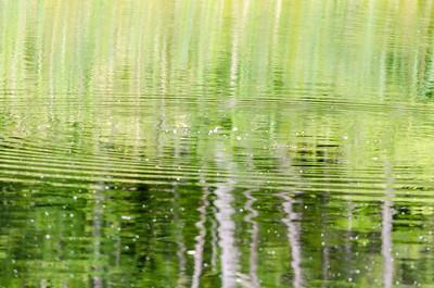 Pond ripples