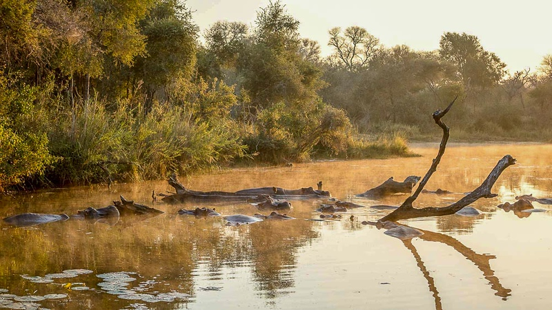 Lake Panic, Kruger National Park