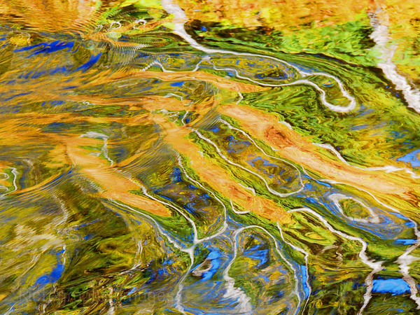 Abstract Art Patterns of Forest Trees Reflected In Waters