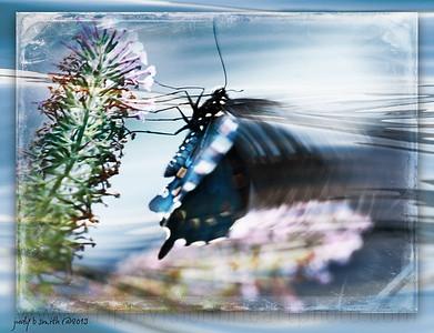 Nectar for Blue