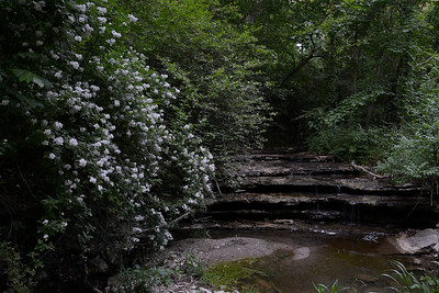 Blackberry Blossoms by a Waterfall