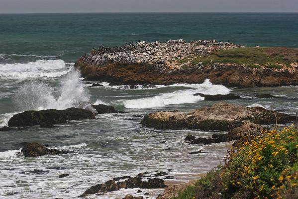 Pescadero Splash