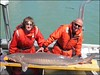 Scientists from the US Fish and Wildlife Service measure and tag adult lake sturgeon to assess fish populations throughout the river system.